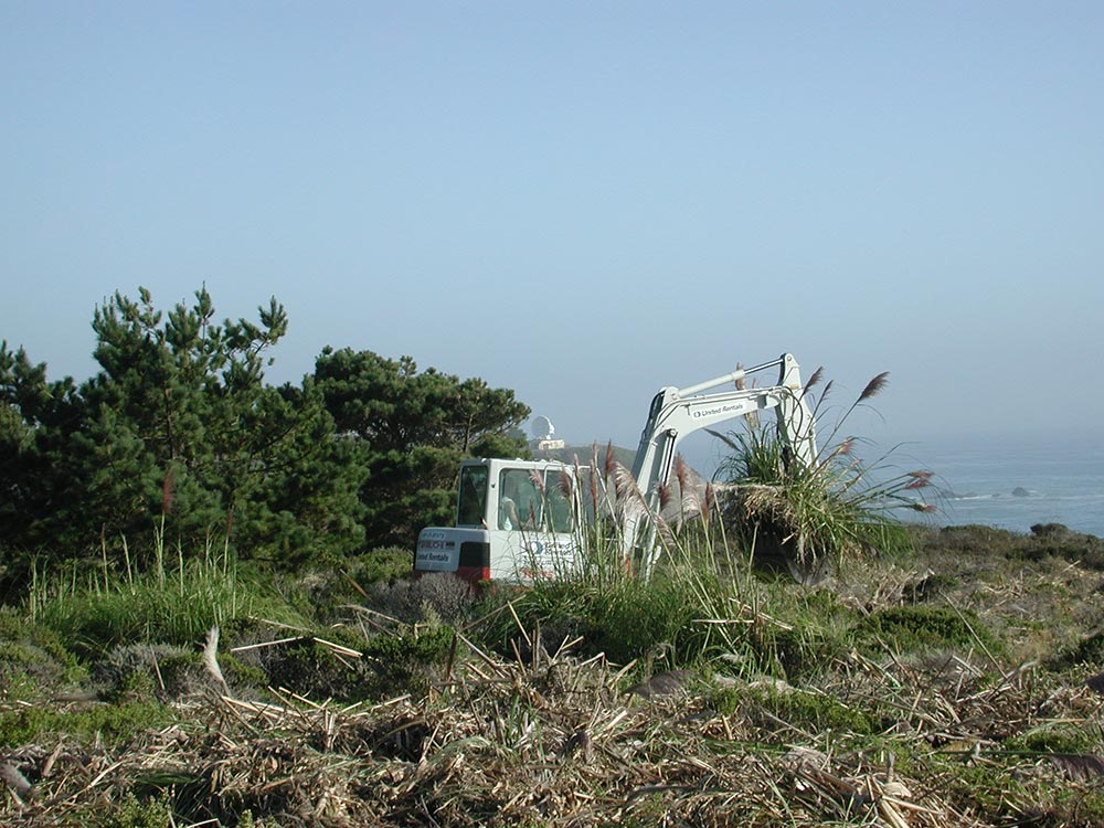 habitat restoration project and invasive plant removal for POST